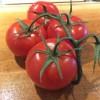 Balsamic Tomato Jam